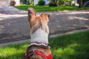 Arnés para que el perro no tire: We love pets